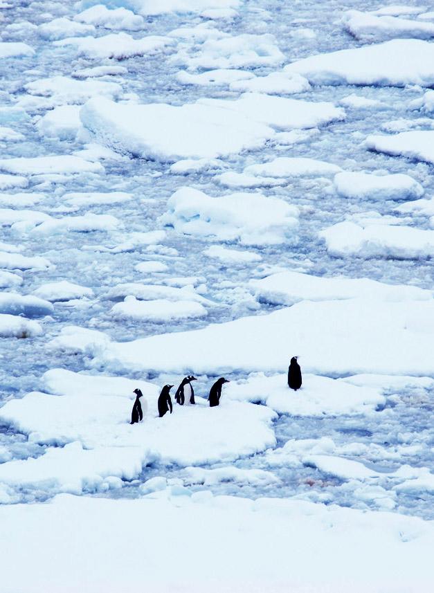 Antarctica-Penguins-Lemaire-Channel