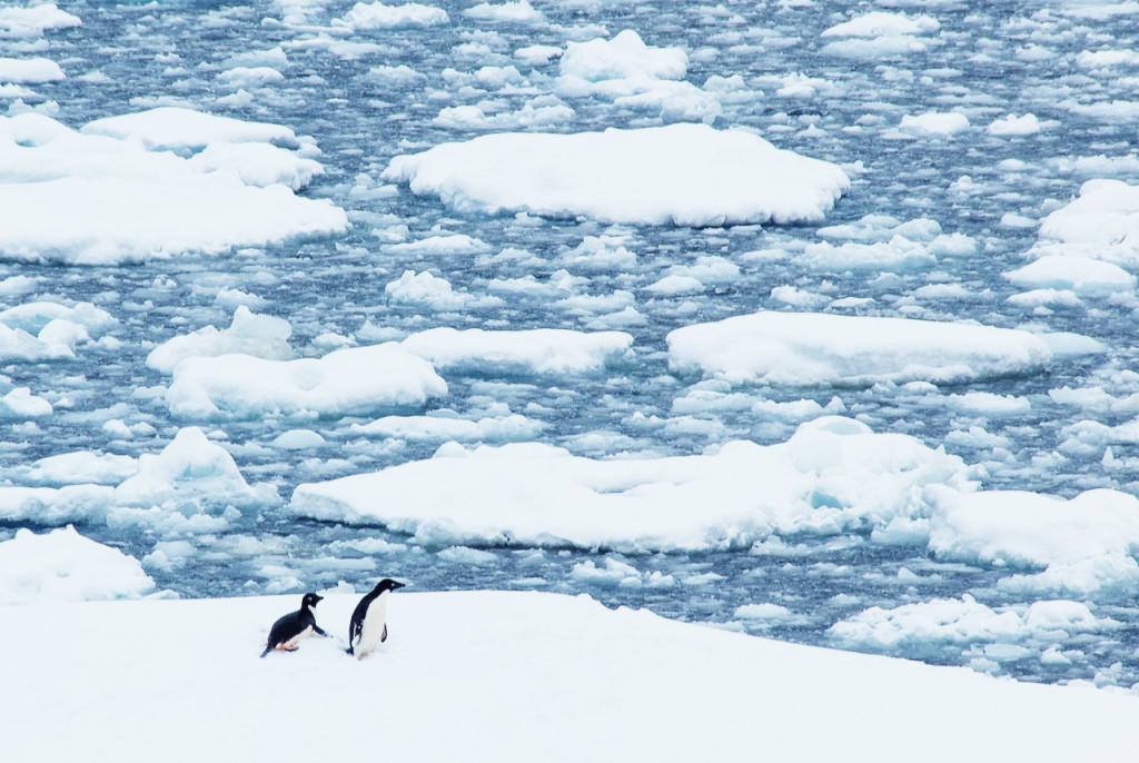 Bucket-List-Travel-Antarctica-To-See-Penguins