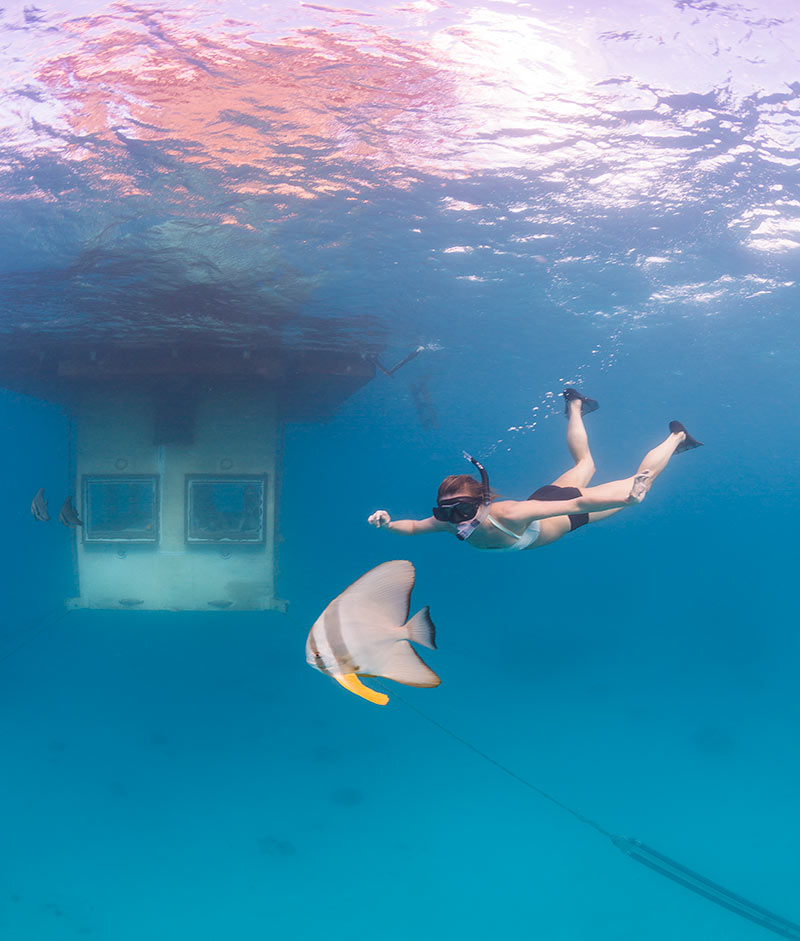 Travel-Inspiration-Snorkling-In-Coral-Reef-Underwater-Hotel-Room