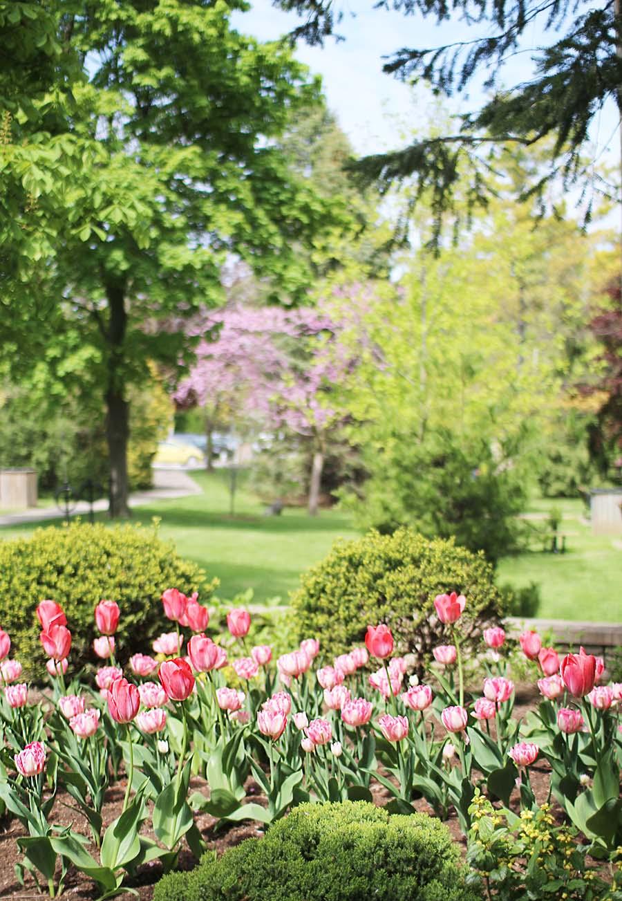 Travel-Ontario-Canada-Tulips-Niagara-On-The-Lake-
