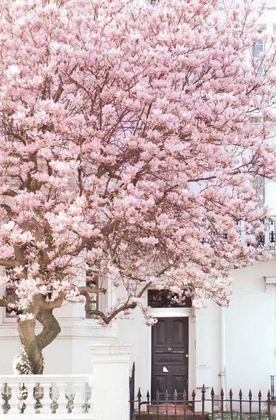 Pink-Tree-Spring-Summer-Color-Inspiration-Wedding