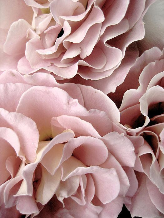 Romantic-Summer-Wedding-Color-Inspiration-Blush-Pink-Bridal-Flowers