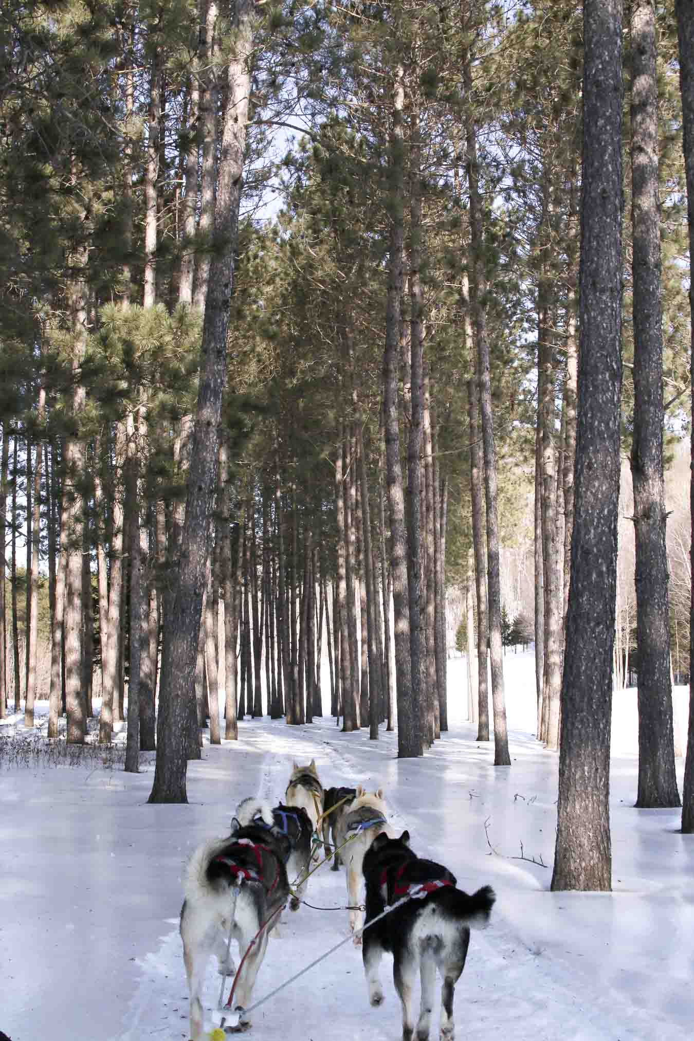 Mont Tremblant Dog Sledding